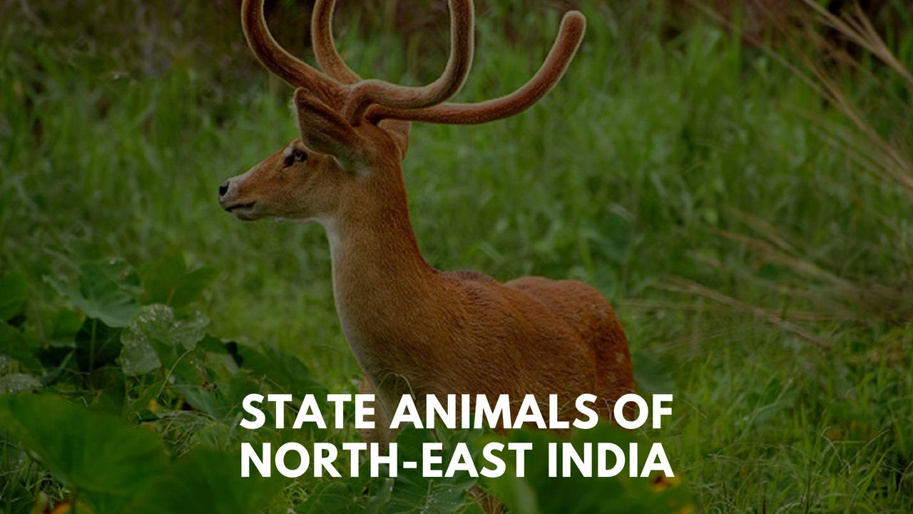 Know the State Animal of North-east India