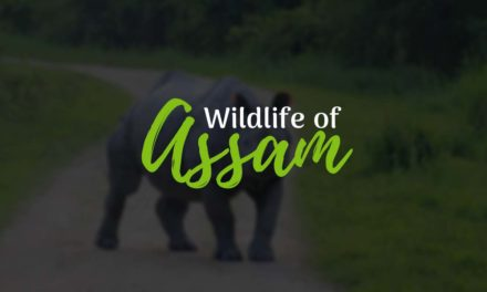 Wildlife of Assam