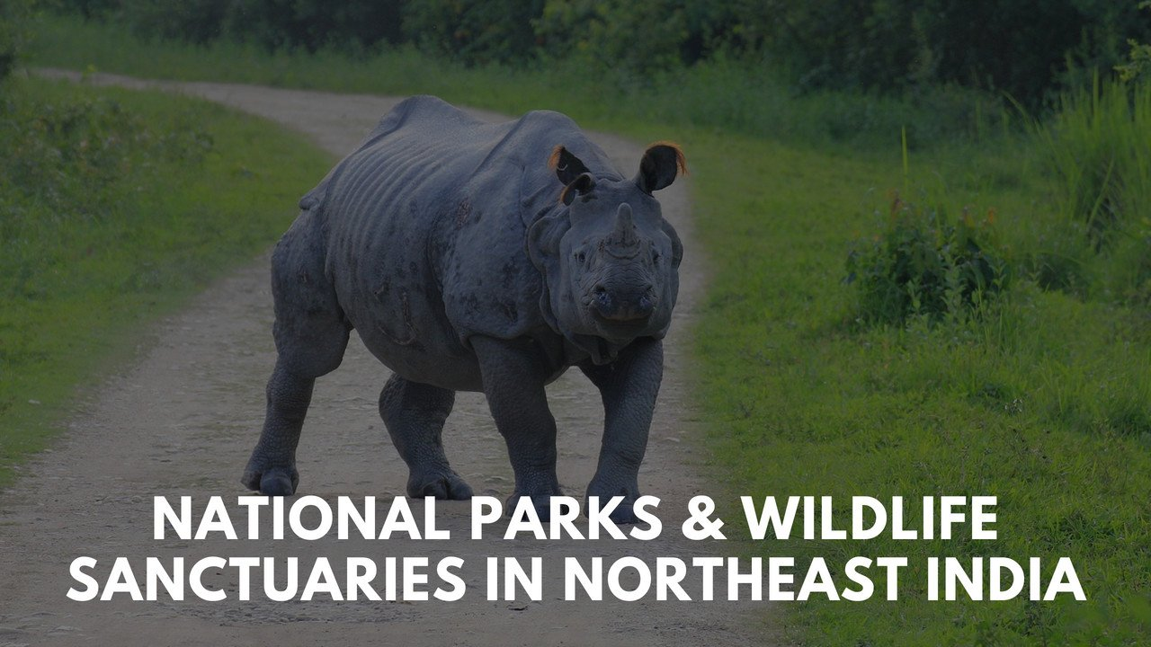 National Parks & Wildlife Sanctuaries in Northeast India